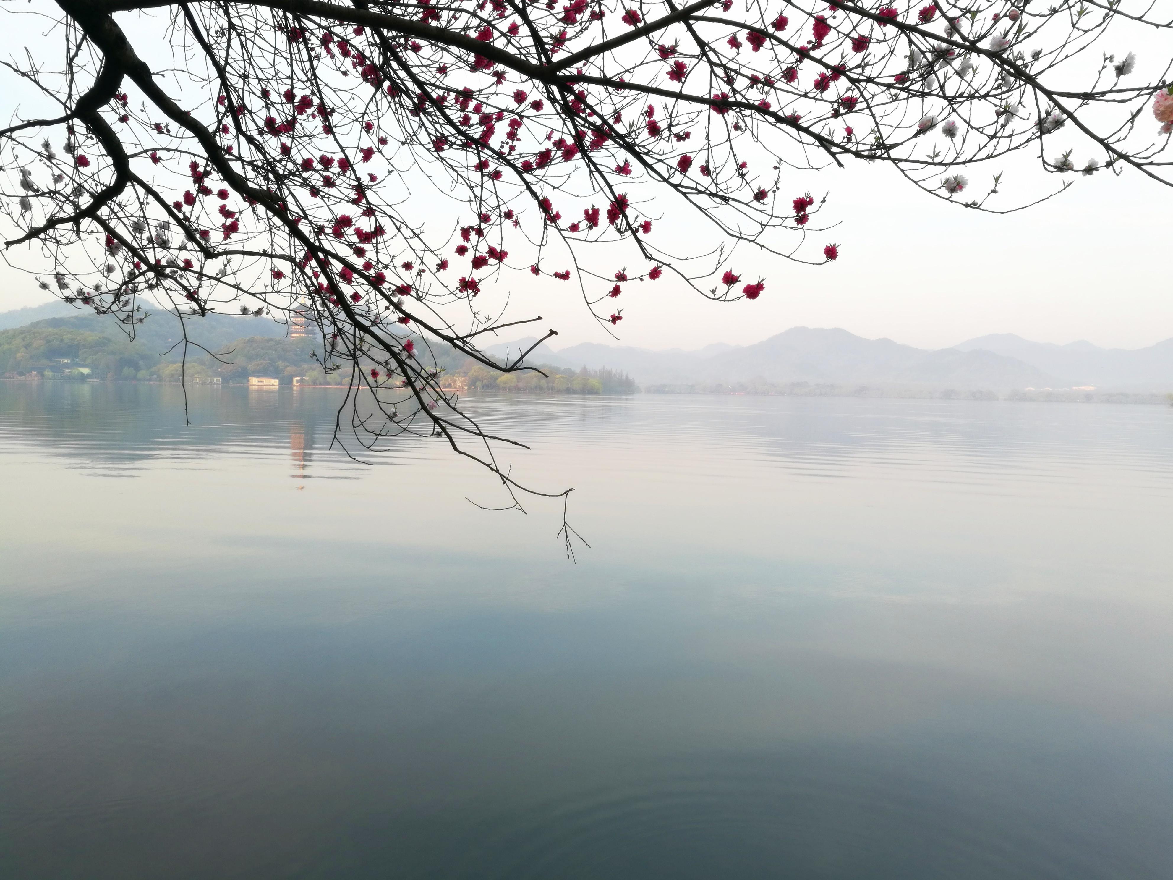 清晨西湖美景